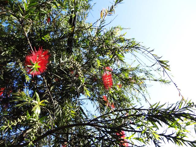 南国の花?